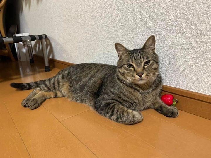 手にリンゴ乗せてる猫